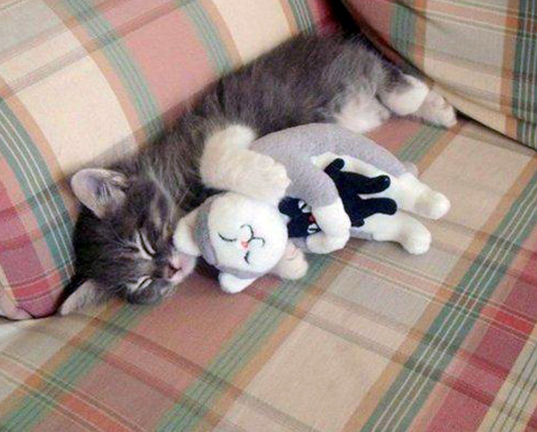 http://files.rsdn.ru/75469/cat_hugging_teddy_hugging_toy.jpg